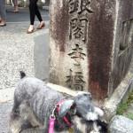 わんこと一緒に銀閣寺に行ってきました!